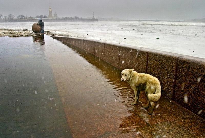 Фото Бездомный пёс под снегопадом