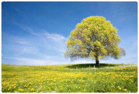 Фото Дерево на лугу (© Флориссия), добавлено: 01.10.2011 15:15