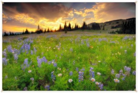 Фото Цветочная поляна (© Флориссия), добавлено: 01.10.2011 15:20
