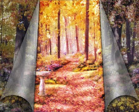 Фото Дождик и листопад в осеннем лесу