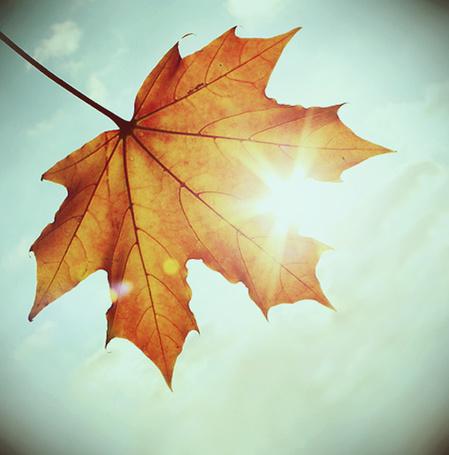 Фото Осенний листочек клёна на фоне неба, через который просвечивает солнце (© D.Phantom), добавлено: 03.10.2011 02:08