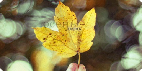 Фото Осенний листочек в руке (ОСЕНЬ осень)