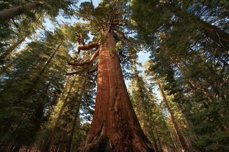 Фото Сосновый лес (© alcatel), добавлено: 03.10.2011 18:55