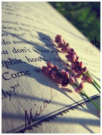 Фото Цветочки на странице книги (© D.Phantom), добавлено: 05.10.2011 00:01