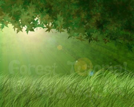 Фото Лес (forest tutorial) (© Флориссия), добавлено: 05.10.2011 15:56
