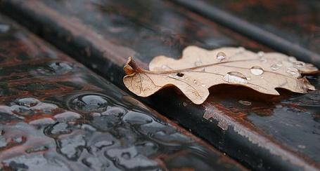 Фото Осенний лист под дождём (© Юки-тян), добавлено: 06.10.2011 00:26