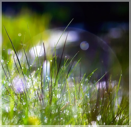 Фото Мыльный пузырь на траве
