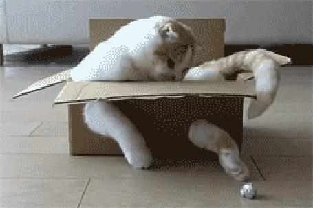 Фото Кот в коробке (© Krista Zarubin), добавлено: 07.10.2011 19:36