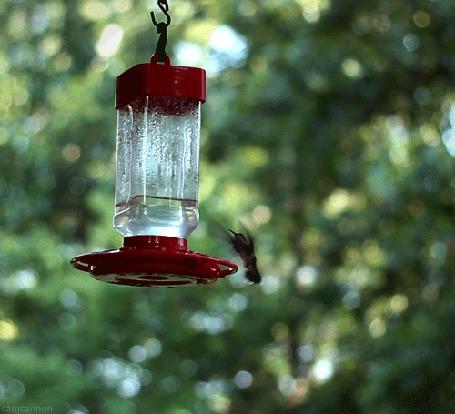 Фото Колибри висит в воздухе около поилки для птиц