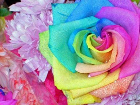 Фото Разноцветный цветок (© Юки-тян), добавлено: 08.10.2011 20:41