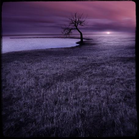 Фото Дерево на берегу озера и сиреневый закат (© Radieschen), добавлено: 15.10.2011 10:21