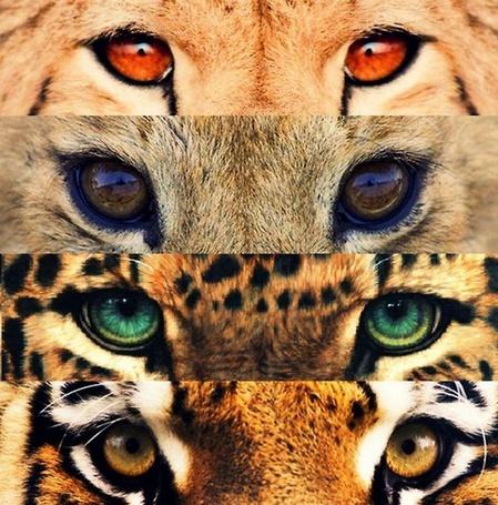 Фото Глаза животных