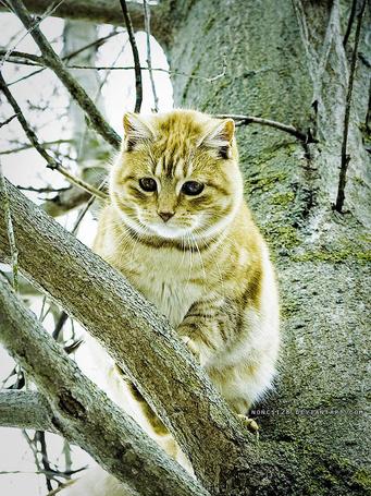 Фото Котик (© Smile_Julia), добавлено: 16.10.2011 15:04