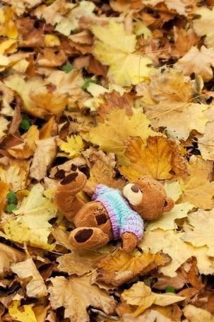 Фото Мишутка лежит на осенних листьях