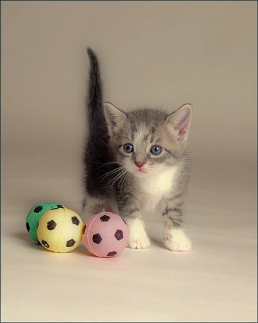 Фото Маленький котёнок с тремя маленькими мячиками (© Яра), добавлено: 18.10.2011 17:22