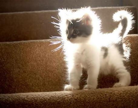 Фото Пушистый котёнок в солнечных лучах (© Anatol), добавлено: 21.10.2011 13:42