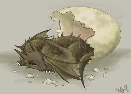Фото Только что вылупившийся дракончик (© Anatol), добавлено: 21.10.2011 15:11