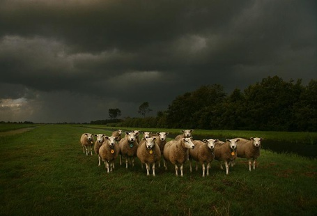 Фото Стадо овец под грозовым небом (© Флориссия), добавлено: 22.10.2011 21:58