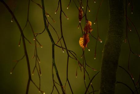 Фото Ветки дерева с одинокими листочками