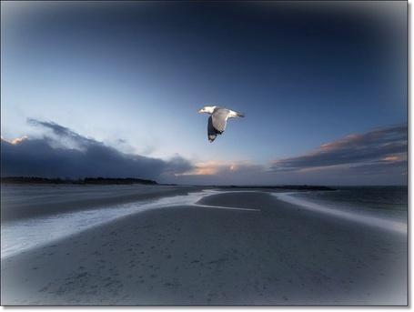 Фото Птица летит по берегу моря