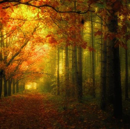 Фото В осеннем лесу (© Anatol), добавлено: 28.10.2011 13:54