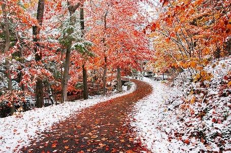 Фото Вслед за осенью, наступая ей на пятки, пришла ранняя зима (© Anatol), добавлено: 28.10.2011 13:55