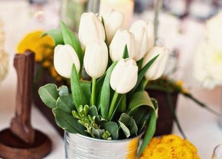 Фото Белые тюльпаны в ведре