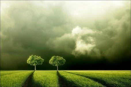 Фото Два дерева на лугу (© Флориссия), добавлено: 28.10.2011 22:04