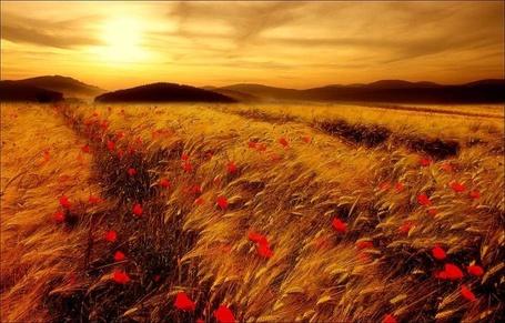 Фото Маки на закате дня (© Флориссия), добавлено: 28.10.2011 22:09