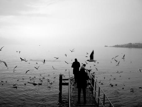 Фото Люди кормят чаек с моста (© Morena), добавлено: 29.10.2011 09:18