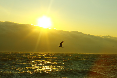 Фото euphoriarayz — «Freedom» (Чайка летит над морем в восходящем солнце)