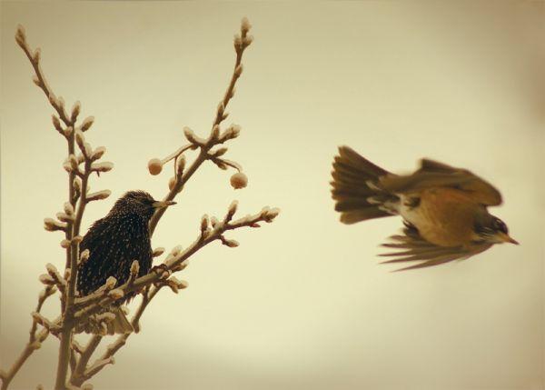 Фото Птица улетела с ветки