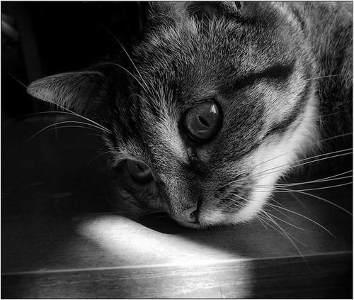 Фото Грустный кот
