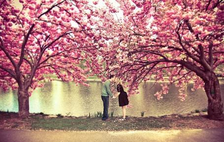 Фото Парень с девушкой целуются держась за руки среди цветущих деревьев