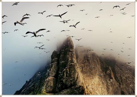 Фото Чайки улетают со скалы (© Флориссия), добавлено: 05.11.2011 19:06