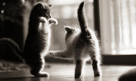 Фото Два игривых котенка (© Радистка Кэт), добавлено: 06.11.2011 04:30
