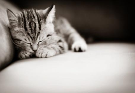 Фото Котенок уснул (© Радистка Кэт), добавлено: 06.11.2011 04:48