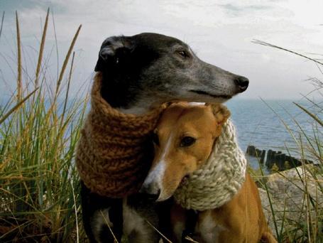 Фото Две охотничьи собаки нежно прижались друг к другу, замёрзнув на холодном ветру (© Anatol), добавлено: 13.11.2011 02:57