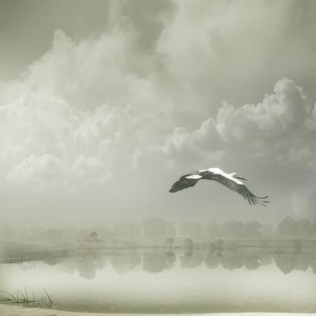 Фото В путь за удачей ( аист летит над озером ) (© Флориссия), добавлено: 14.11.2011 14:19
