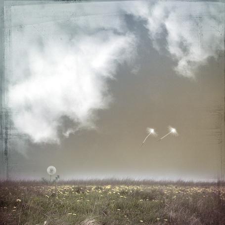 Фото Ростки надежды ( одуванчики в поле и низкие белые облака ) (© Флориссия), добавлено: 20.11.2011 14:02
