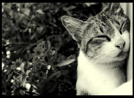 Фото Спящий кот на фоне листьев