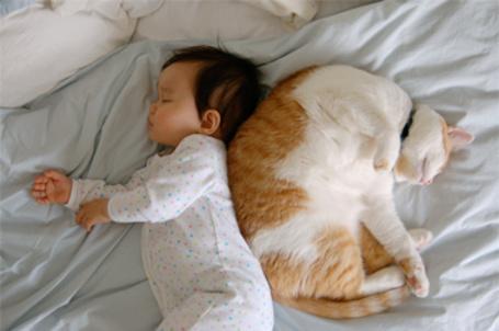 Фото Котик спит возле малыша, спина к спине (© Mary), добавлено: 24.11.2011 01:55