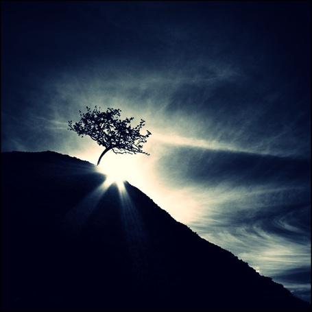 Фото Дерево на фоне солнца