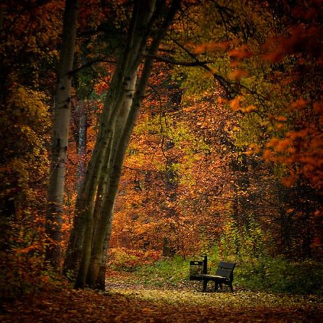 Фото Лавочка в осеннем лесу (© Morena), добавлено: 28.11.2011 15:13