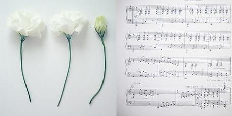 Фото Три цветка и ноты (© Antuannet), добавлено: 29.11.2011 16:55