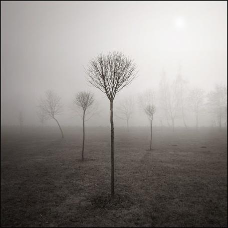 Фото Одинокие молодые деревца (© Radieschen), добавлено: 30.11.2011 03:27