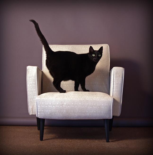 Кот на кресле картинки для детей