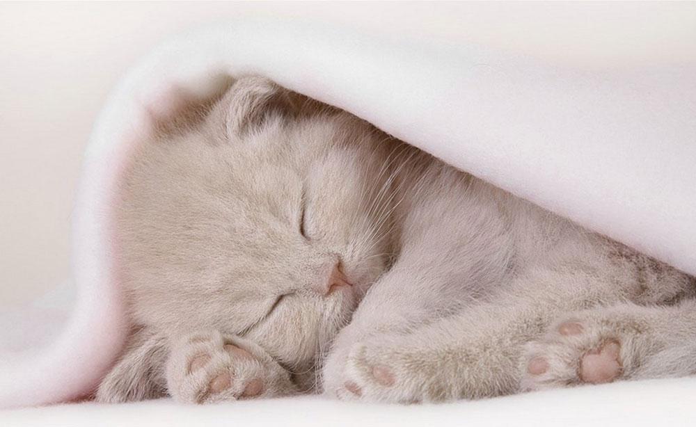 Николаем чудотворцем, спокойной ночи картинки с котятами голубые и зеленые