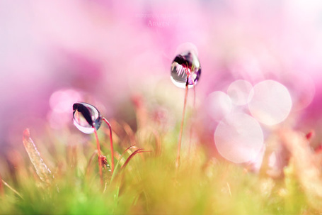 Фото капельки росы на травинках (© Капитошка), добавлено: 01.12.2011 00:25