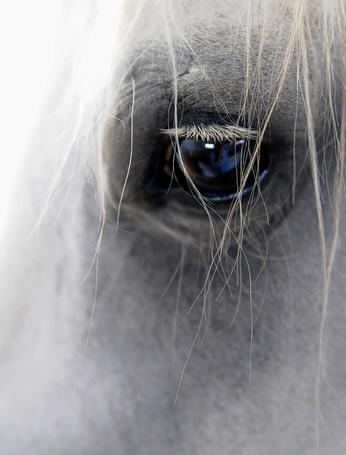 Фото Голубой глаз серого коня